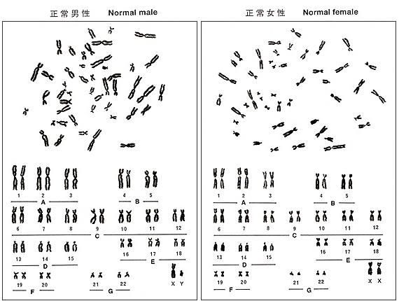 Giemsa Staining Method Radiation Effects Research